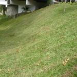 vivero-costa-rica-mantenimiento-condominio-101