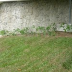 vivero-costa-rica-mantenimiento-condominio-104