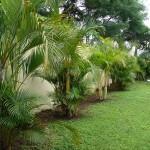 vivero-costa-rica-mantenimiento-condominio-16