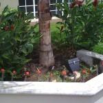 vivero-costa-rica-mantenimiento-condominio-55