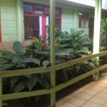 vivero-costa-rica-mantenimiento-condominio-81