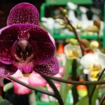 vivero-costa-rica-orquideas-04