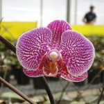 vivero-costa-rica-orquideas-09