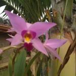 vivero-costa-rica-orquideas-15