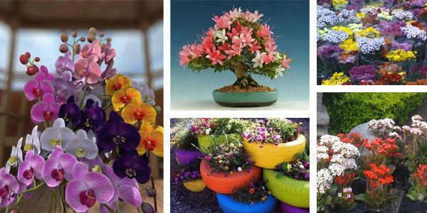 Vivero Costa Rica, plantas y flores Costa Rica, Vivero Flora Vitae, mantenimiento de áreas comunes