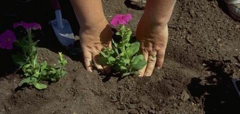 Consejos a la hora de plantar