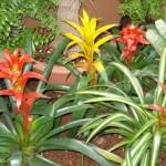 vivero-costa-rica-plantas-02