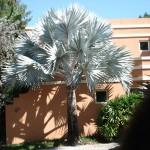 vivero-costa-rica-plantas-04