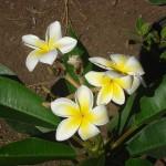 vivero-costa-rica-plantas-05