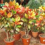 vivero-costa-rica-plantas-10