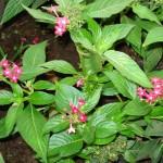 vivero-costa-rica-plantas-12