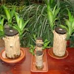 vivero-costa-rica-plantas-14
