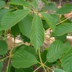 vivero-costa-rica-plantas-19
