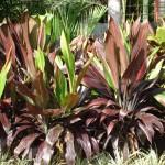 vivero-costa-rica-plantas-26