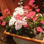 vivero-costa-rica-plantas-36