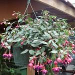 vivero-costa-rica-plantas-40