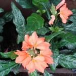 vivero-costa-rica-plantas-47
