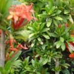 vivero-costa-rica-plantas-49
