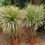 vivero-costa-rica-plantas-56