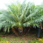 vivero-costa-rica-plantas-60