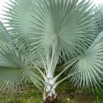 vivero-costa-rica-plantas-61