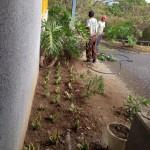 vivero-flora-vitae-mantenimiento-08