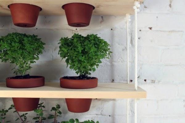 Vivero Costa Rica - Plantas y consejos para jardines - Costa Rica
