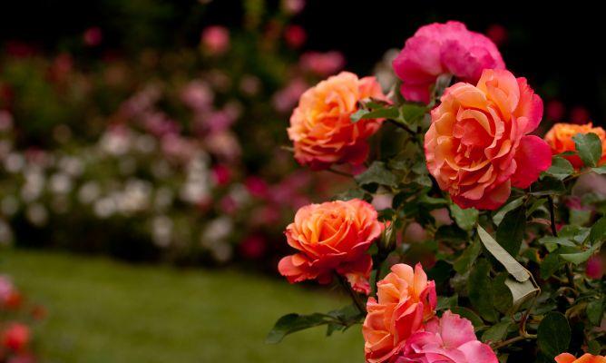 20150115-rosales