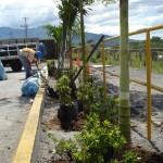 vivero-costa-rica-mantenimiento-condominio-19