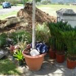 vivero-costa-rica-mantenimiento-condominio-27