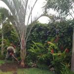 vivero-costa-rica-mantenimiento-condominio-66