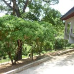 vivero-costa-rica-mantenimiento-condominio-95