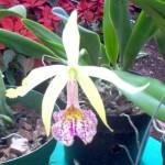 vivero-costa-rica-orquideas-13