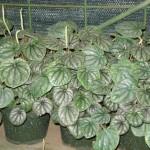 vivero-costa-rica-plantas-07