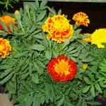 vivero-costa-rica-plantas-09