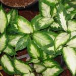vivero-costa-rica-plantas-16
