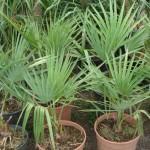 vivero-costa-rica-plantas-17
