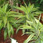 vivero-costa-rica-plantas-20