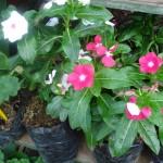 vivero-costa-rica-plantas-25