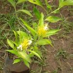 vivero-costa-rica-plantas-27