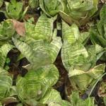 vivero-costa-rica-plantas-29