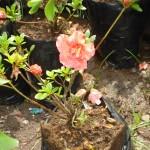 vivero-costa-rica-plantas-31