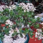 vivero-costa-rica-plantas-33
