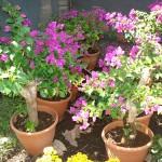 vivero-costa-rica-plantas-34