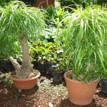 vivero-costa-rica-plantas-35