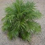 vivero-costa-rica-plantas-37