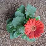 vivero-costa-rica-plantas-41
