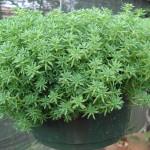 vivero-costa-rica-plantas-52