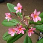 vivero-costa-rica-plantas-57