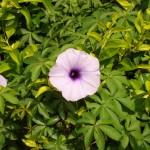 vivero-costa-rica-plantas-58